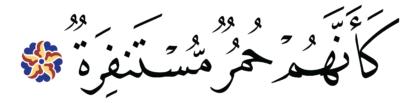 Al-Muddaththir 74, 50