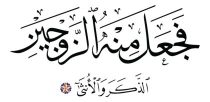 Al-Qiyâmah 75, 39